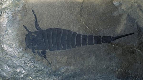 10 поразительных фактов о скорпионах, которые вы не знали