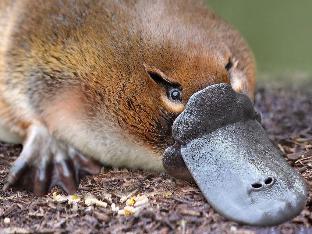 Топ 10 животных, способных нанести самые болезненные укусы в природе