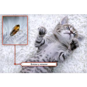 блохи у кошки, причины появления и как избавиться