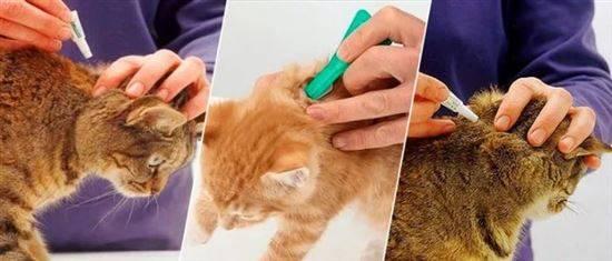 лечение блох у кота