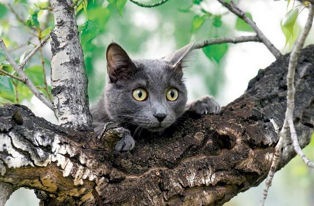 клещи у кошки