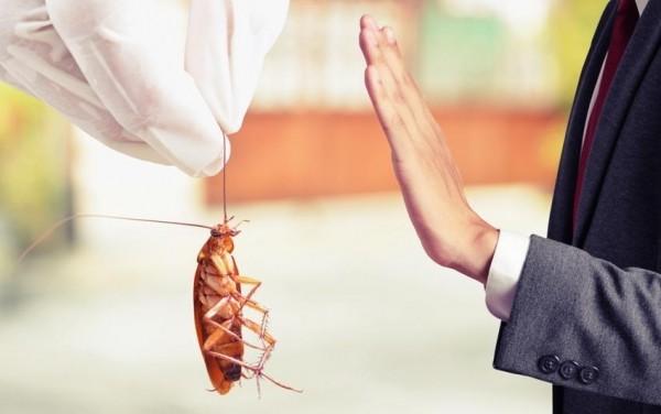 Как избавиться от тараканов и чем они опасны?