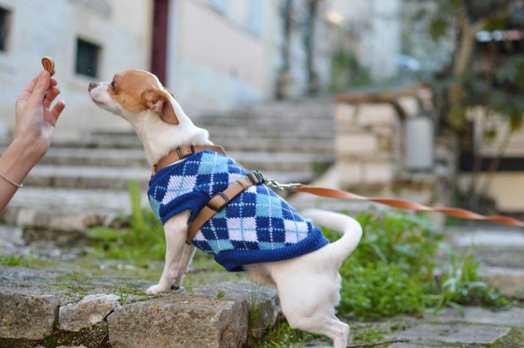 Как выбрать лучший корм для своей собаки? Какой корм лучше: сухой или влажный?